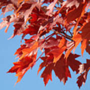 Fall Red Orange Leaves Blue Sky Baslee Troutman Poster