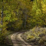 Fall Roads Poster
