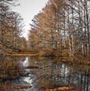 Fall Swamp Poster