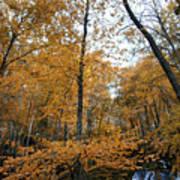 Fall Tees At  Yankee Horse Overlook   Poster