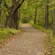 Fall Trail Scene 45 B Poster