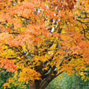 Fall Tree Art Print Autumn Leaves Poster