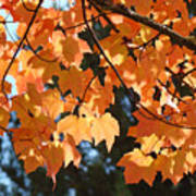 Fall Tree Art Prints Orange Autumn Leaves Baslee Troutman Poster