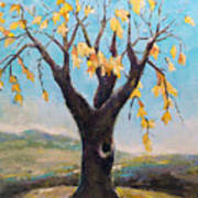 Fall Tree In Virginia Poster by Becky Kim