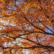 Fall Tree With Star Burst Poster