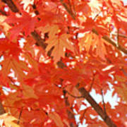 Fall Trees Colorful Autumn Leaves Art Baslee Troutman Poster