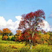 Fall Trees In Country Field Poster