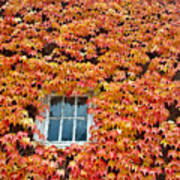 Fall Window Poster