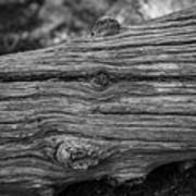 Fallen Black And White Trees And Lines In Nature Poster