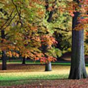 Fallen Leaves II Poster