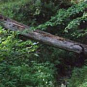 Fallen Log Poster