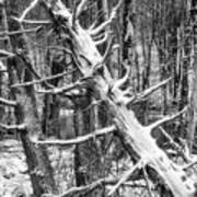 Fallen Tree And Snow Poster