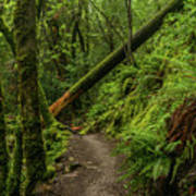 Fallen Tree On The Trail Poster
