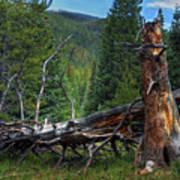Fallen Tree Poster