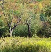 Fallow Meadow Poster