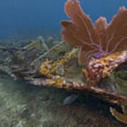 Fan Coral On Elbow Reef In Key Largo Poster