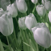 Fanciful Tulips In Green Poster