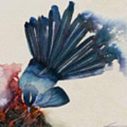 Fantail Flycatcher Poster