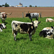 Fantastic Farm On A Spring Day With Cows Poster