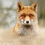 Fantastic Mr Fox Poster