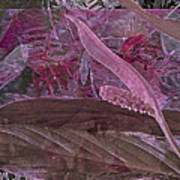Fantasy African Violets And Peace Lily Pink, Red And Pink Poster