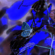 Fantasy Blue Butterfly Poster