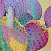 Fantasy Cactus Poster