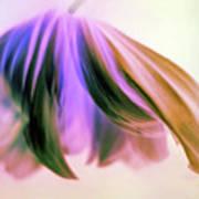 Fantasy Floral Poster