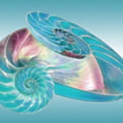 Fantasy Seashells Entwined Poster