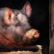 Farm - Pig - Piggy Number Two Poster