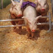 Farm - Pig - Getting Past Hurdles Poster by Mike Savad