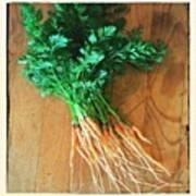 Fresh Carrots Poster