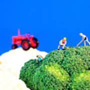 Farming On Broccoli And Cauliflower II Poster