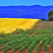 Farmlands Of The Willamette Valley Poster