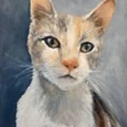 Farmyard Cat Poster
