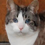 Fat Cats Of Ballard 3 Poster