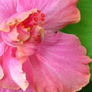 Favorite Flower 3 Poster