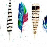 Feather Study Poster