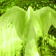 Feathers Of Light - Green Poster