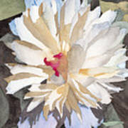 Feathery Flower Poster by Ken Powers