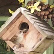 Feeding Birds Poster
