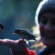 Feeding Birds In Hyde Park Poster