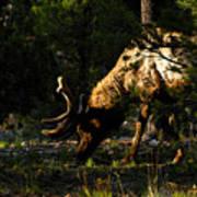 Feeding Elk Poster