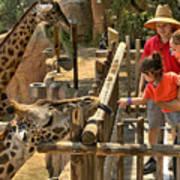 Feeding Giraffe 2 Poster