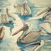 Feeding Pelicans Poster