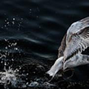 Feeding Seagull Poster