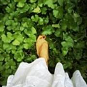Feet Around The World #3 Poster