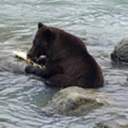 Feasting Bear Poster