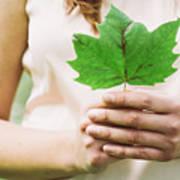Female Hands Holding Leaf Poster
