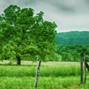 Fence Row And Tree Poster